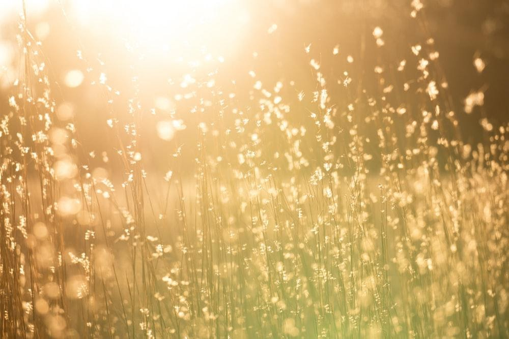 5 commonly asked questions about photovoltaic technology for water systems