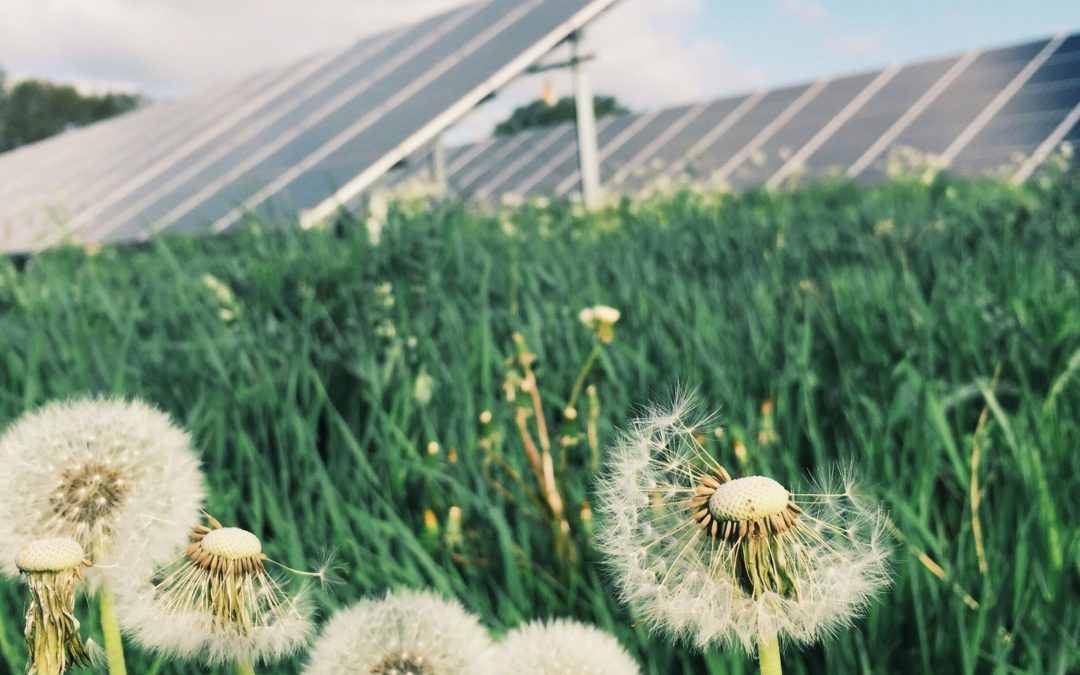 Flowers grow well beneath solar panels, according to a study